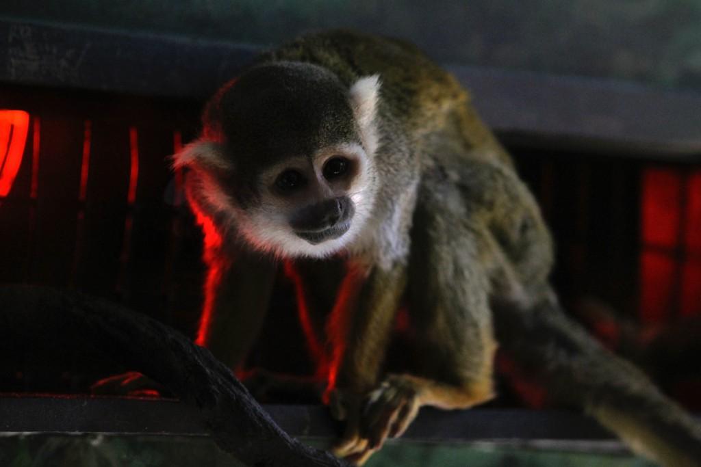 t.sol zoo