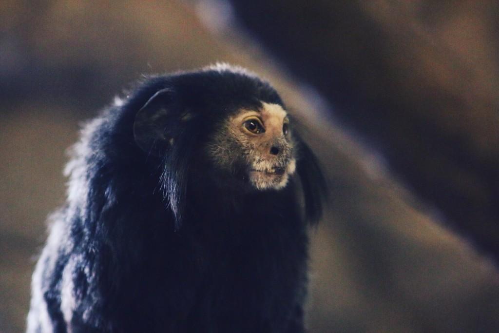 t.sol monkey