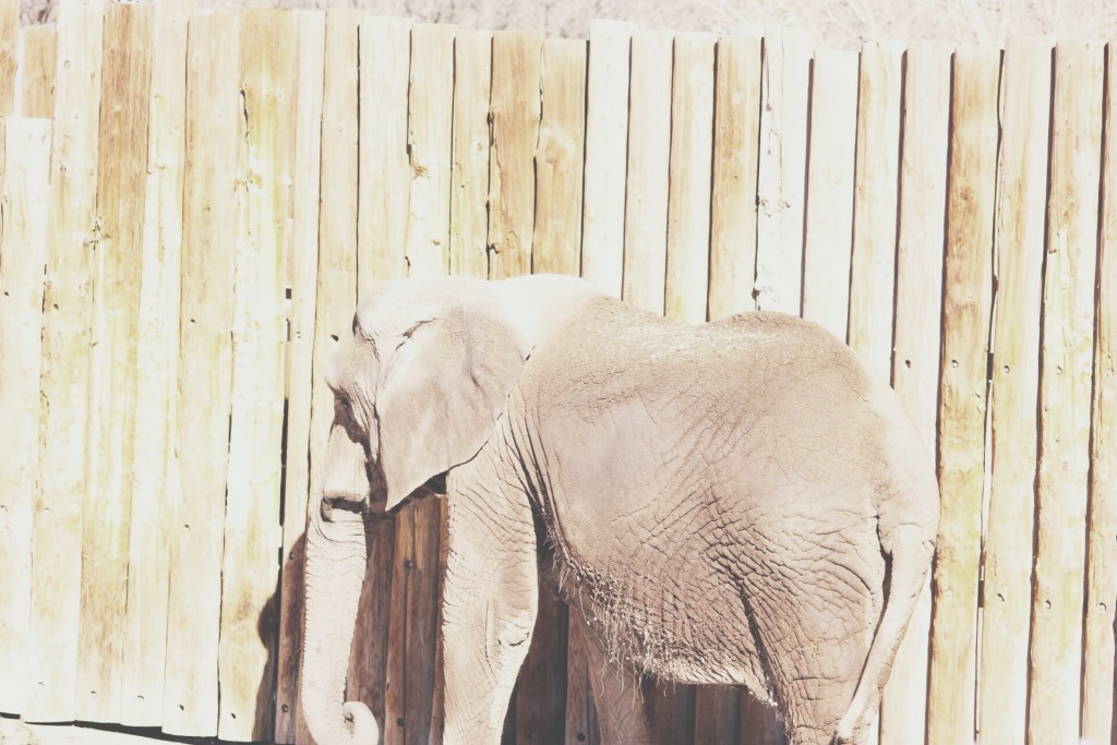 t.sol elephants